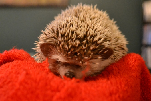 hedgie frowny face