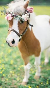 wedding flower pony